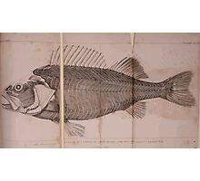 The Animal Kingdom by Georges Cuvier, PA Latreille, and Henry McMurtrie 1834  202 - Pisces Fish Photographic Print