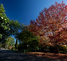 Westbrook Avenue Wahroonga NSW by MiImages