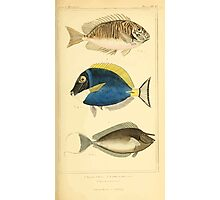 The Animal Kingdom by Georges Cuvier, PA Latreille, and Henry McMurtrie 1834  156 - Pisces Fish Photographic Print