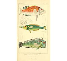 The Animal Kingdom by Georges Cuvier, PA Latreille, and Henry McMurtrie 1834  178 - Pisces Fish Photographic Print