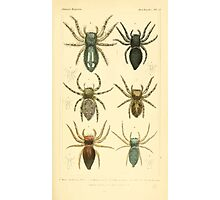 The Animal Kingdom by Georges Cuvier, PA Latreille, and Henry McMurtrie 1834  398 - Arachnides Arachnids Photographic Print