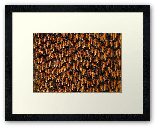 Honeybees by AravindTeki