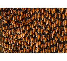 Honeybees Photographic Print