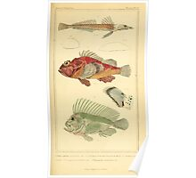 The Animal Kingdom by Georges Cuvier, PA Latreille, and Henry McMurtrie 1834  085 - Pisces Fish Poster