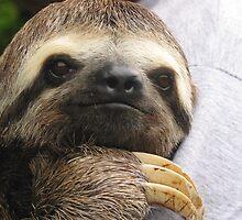 Young Sloth by kingdomofanimal
