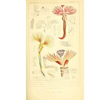 The Animal Kingdom by Georges Cuvier, PA Latreille, and Henry McMurtrie 1834  289 - Annelides Large Invertebrates or Worms Photographic Print