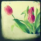 Tulips TTV style by Claire Penn