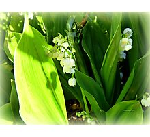 MUGUET Photographic Print