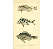 The Animal Kingdom by Georges Cuvier, PA Latreille, and Henry McMurtrie 1834  102 - Pisces Fish Photographic Print