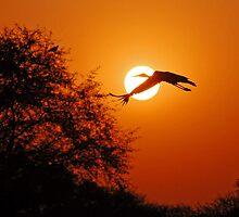 BIRDS OF RAJASTHAN by Marieseyes