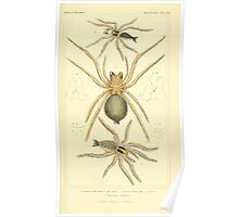 The Animal Kingdom by Georges Cuvier, PA Latreille, and Henry McMurtrie 1834  367 - Arachnides Arachnids Poster