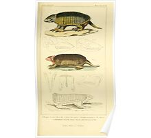 The Animal Kingdom by Georges Cuvier, PA Latreille, and Henry McMurtrie 1834 614 - Mammalia Mammals Poster