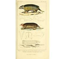 The Animal Kingdom by Georges Cuvier, PA Latreille, and Henry McMurtrie 1834 614 - Mammalia Mammals Photographic Print