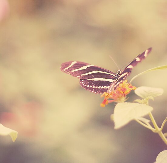 Zebra Longwing by Kristybee