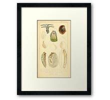 The Animal Kingdom by Georges Cuvier, PA Latreille, and Henry McMurtrie 1834  262 - Mollusca Mollusks Framed Print