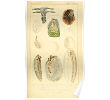 The Animal Kingdom by Georges Cuvier, PA Latreille, and Henry McMurtrie 1834  262 - Mollusca Mollusks Poster