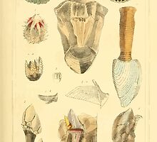 The Animal Kingdom by Georges Cuvier, PA Latreille, and Henry McMurtrie 1834  288 - Mollusca Mollusks by wetdryvac