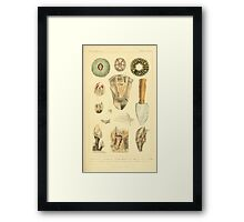 The Animal Kingdom by Georges Cuvier, PA Latreille, and Henry McMurtrie 1834  288 - Mollusca Mollusks Framed Print