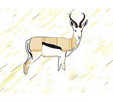 Larravide Gazelle 22 Photographic Print