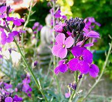 Pretty Purple by digitaldavers