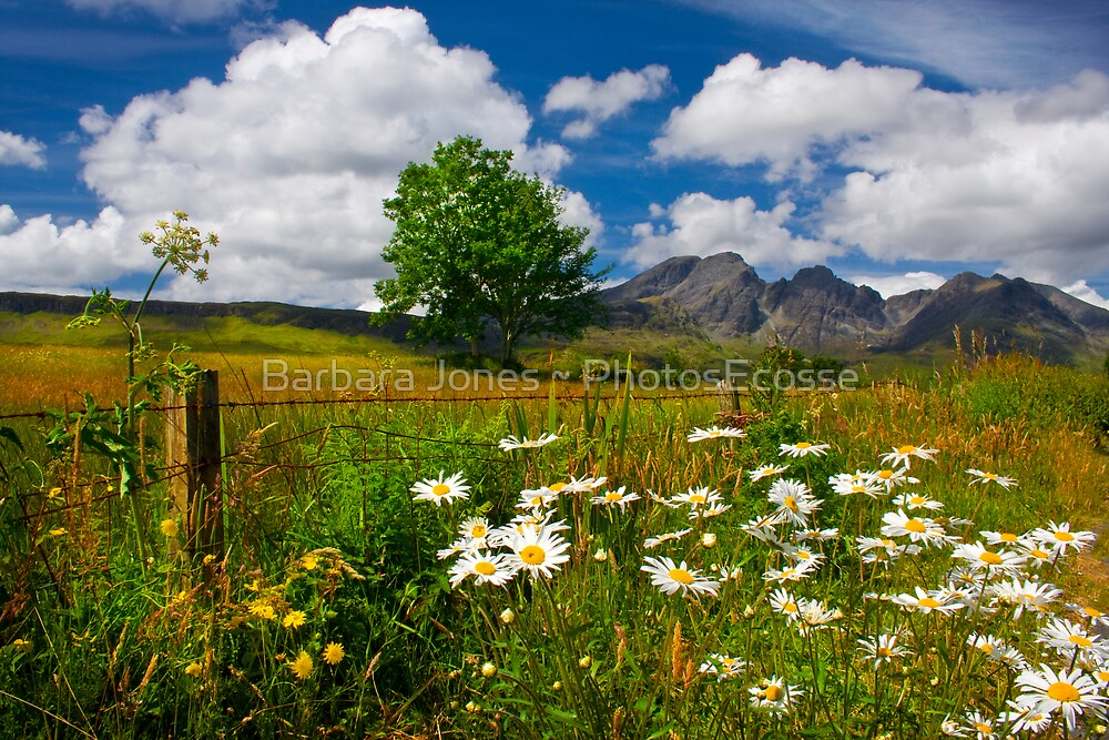 Blaven, and Summer Flowers, Torrin, Isle Of Skye, Scotland. by PhotosEcosse