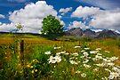 Blaven, and Summer Flowers, Torrin, Isle Of Skye, Scotland. by photosecosse /barbara jones