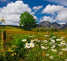 Blaven, and Summer Flowers, Torrin, Isle Of Skye, Scotland. by photosecosse /barbara jones