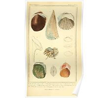 The Animal Kingdom by Georges Cuvier, PA Latreille, and Henry McMurtrie 1834  267 - Mollusca Mollusks Poster