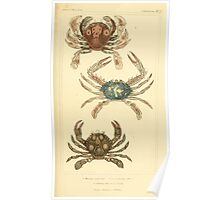 The Animal Kingdom by Georges Cuvier, PA Latreille, and Henry McMurtrie 1834  302 - Crustacea Crustaeans Poster