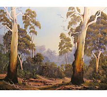 The Scent Of Gumtrees In Australia Photographic Print