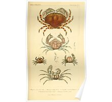 The Animal Kingdom by Georges Cuvier, PA Latreille, and Henry McMurtrie 1834  306 - Crustacea Crustaeans Poster