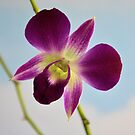 Orchid by Jeff Ore