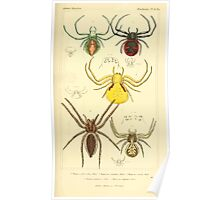 The Animal Kingdom by Georges Cuvier, PA Latreille, and Henry McMurtrie 1834  380 - Arachnides Arachnids Poster