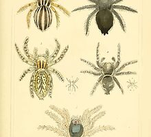 The Animal Kingdom by Georges Cuvier, PA Latreille, and Henry McMurtrie 1834  396 - Arachnides Arachnids by wetdryvac