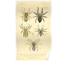 The Animal Kingdom by Georges Cuvier, PA Latreille, and Henry McMurtrie 1834  396 - Arachnides Arachnids Poster
