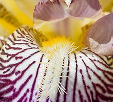 complexity of an iris by jude walton