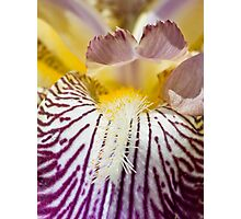 complexity of an iris Photographic Print