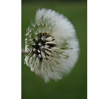 Fluffy Photographic Print
