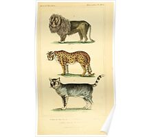 The Animal Kingdom by Georges Cuvier, PA Latreille, and Henry McMurtrie 1834 597 - Mammalia Mammals Poster