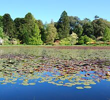 Castle Kennedy Gardens,(Lily Pond) s/w Scotland. by Phil Mitchell