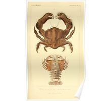 The Animal Kingdom by Georges Cuvier, PA Latreille, and Henry McMurtrie 1834  330 - Crustacea Crustaeans Poster
