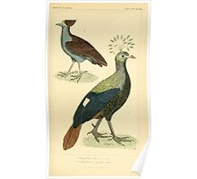 The Animal Kingdom by Georges Cuvier, PA Latreille, and Henry McMurtrie 1834 717 - Aves Avians Birds Poster