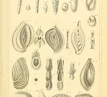 The Animal Kingdom by Georges Cuvier, PA Latreille, and Henry McMurtrie 1834  219 - Mollusca Mollusks by wetdryvac