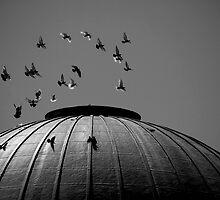 The Birds by Bart Reardon