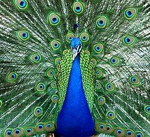 Peacock, L.A. Arboretum by George Paul Miller