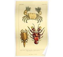 The Animal Kingdom by Georges Cuvier, PA Latreille, and Henry McMurtrie 1834  318 - Crustacea Crustaeans Poster