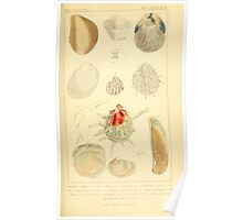 The Animal Kingdom by Georges Cuvier, PA Latreille, and Henry McMurtrie 1834  259 - Mollusca Mollusks Poster