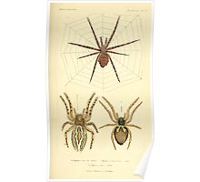 The Animal Kingdom by Georges Cuvier, PA Latreille, and Henry McMurtrie 1834  381 - Arachnides Arachnids Poster
