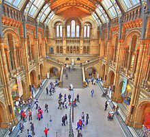 Natural History Museum, London by Albert Tsui