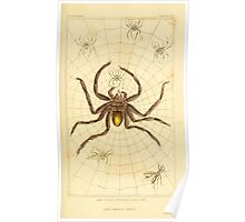 The Animal Kingdom by Georges Cuvier, PA Latreille, and Henry McMurtrie 1834  385 - Arachnides Arachnids Poster